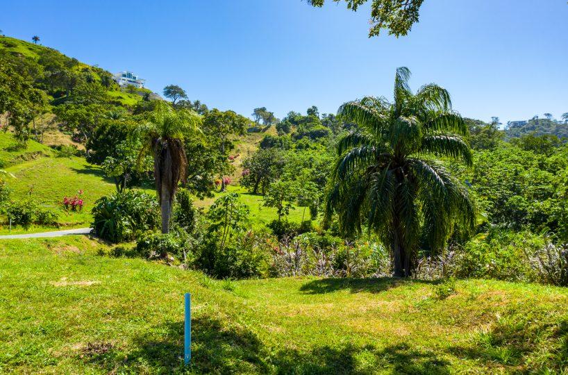 Tropical greenery on an uphill landscape - Roatan, Honduras | Roatan Life Real Estate
