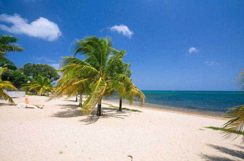 Palm trees on a white sand beach in Roatan | Roatan Life Real Estate