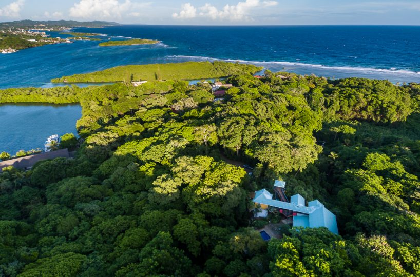Lush Roatan jungle overlooking the Caribbean Sea